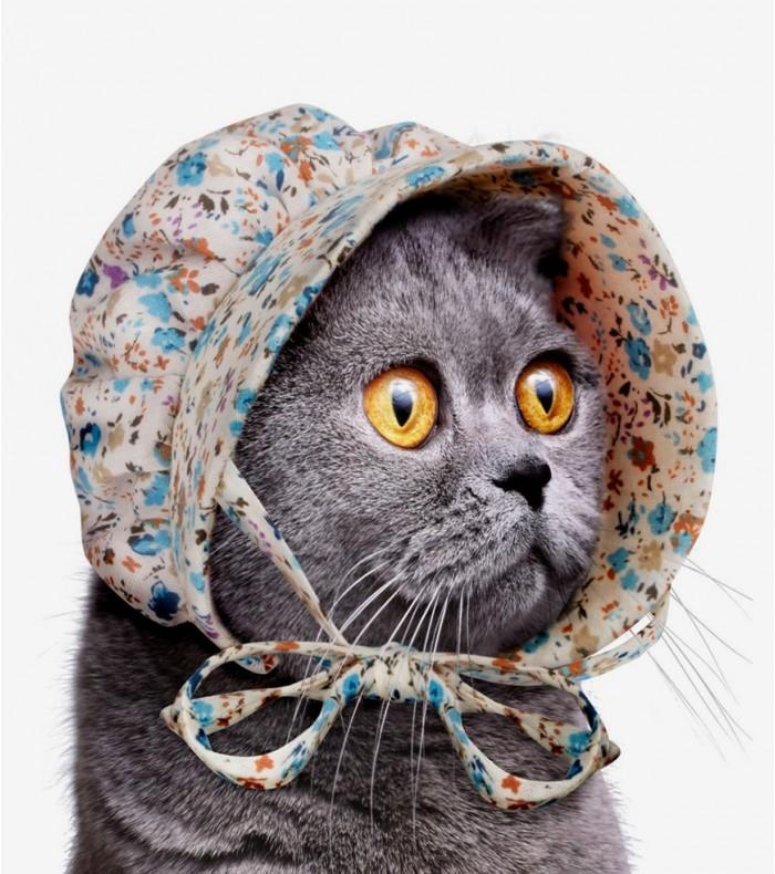 Bonnet pour chat - Wishlist geekmick
